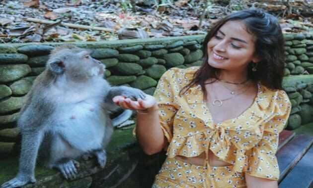 Memberi Makan Monyet di Ubud Monkey Forest Ubud Bali