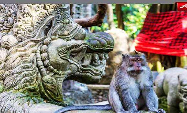 Hutan Kera Ubud Bali