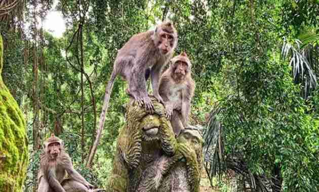 monkey forest ubud bali price