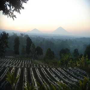 Wisata Agro Plaga Badung Bali