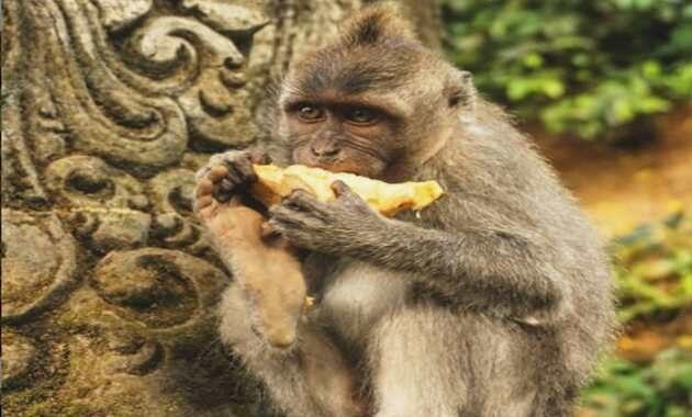 sangeh monkey forest ubud bali