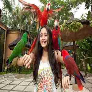 Bali Bird Park Gianyar Bali