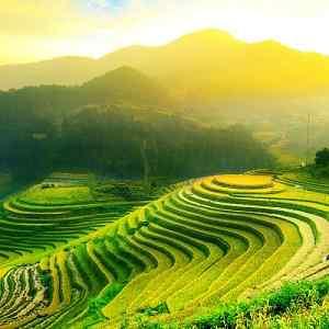 Sawah Terasering Tegalalang Ubud Bali