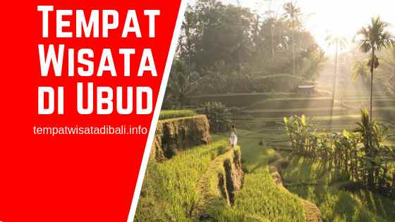Sawah Terasering di Ubud Bali