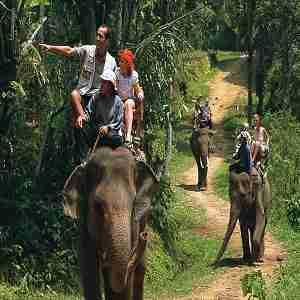 Wisata Naik Gajah di Desa Taro Bali