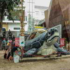 Bali Sea Turtle Society Kuta