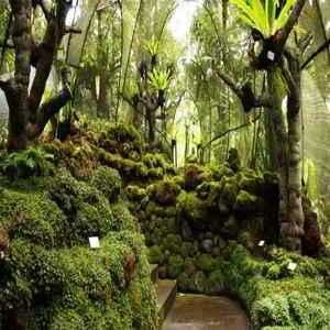 Koleksi Kebun Raya Eka Karya Bedugul Bali