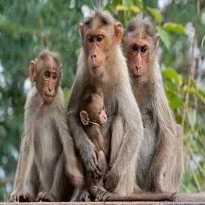 Sejarah dan Misteri Objek Wisata Alas Kedaton Monkey Forest Tabanan Bali
