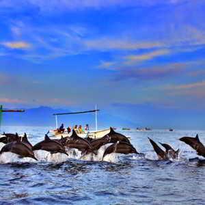 Objek Wisata Pantai Lovina Bali