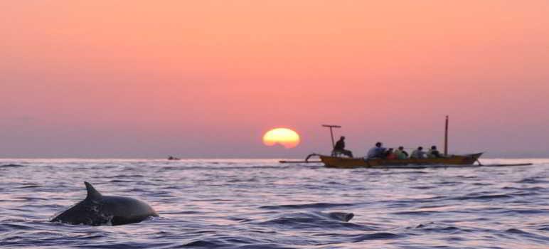 Dolphin Lovina Buleleng Bali