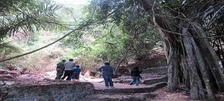 Pohon Taru Menyan Desa Trunyan Bali
