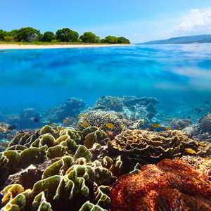 Sejarah Taman Nasional Bali Barat TNBB