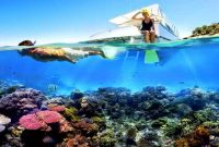 Wisata Pulau Menjangan Bali