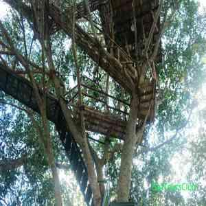 Rumah Pohon Bukit Lempad Peladang Bali