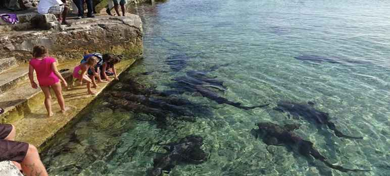 Bali Shark Island di Pulau Serangan Denpasar Bali