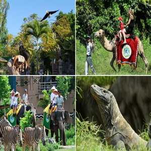 Wahana Bali Safari And Marine Park Gianyar