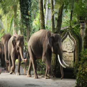 Elephant Safari Park Gianyar Bali