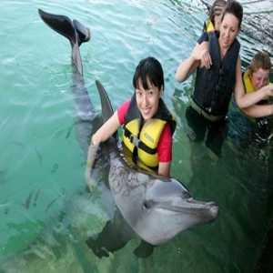 Dolphin Lodge Serangan Island Bali