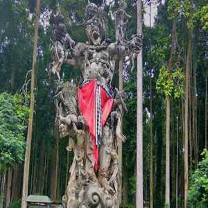 Sejarah Sangeh Monkey Forest Badung Bali