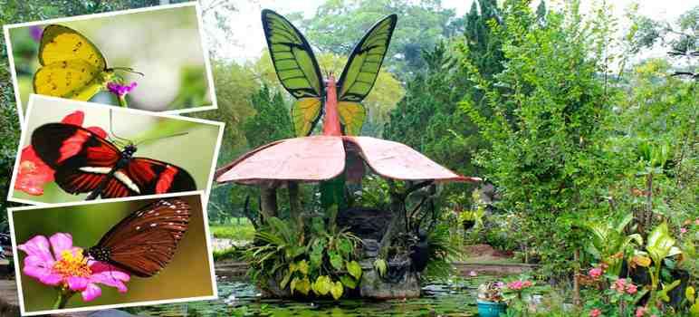 Taman Kupu - Kupu Tabanan Bali