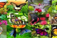 Bali Butterfly Park Tabanan