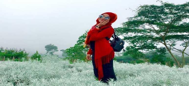 Gambar Foto Bunga Kasna di Desa Temukus Karangasem Bali