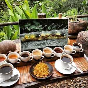 Bali Paulina Coffee Plantations