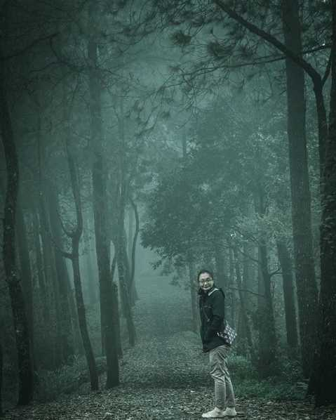 Hutan Pinus Kintamani Bangli Bali