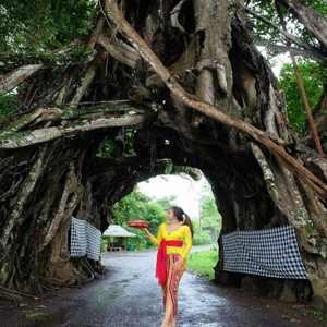 Bunut Bolong Jembrana Bali