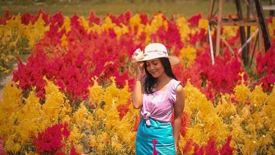 Taman Bunga Matahari di Tabanan Bali