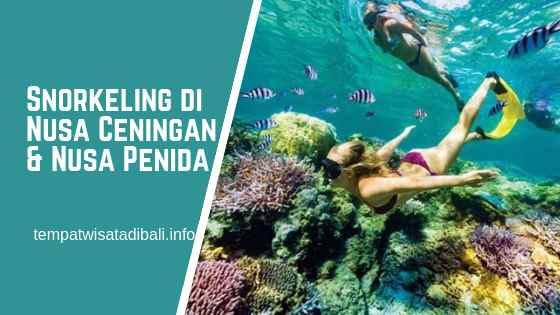 Tempat Snorkeling di Nusa Ceningan dan Nusa Penida Bali