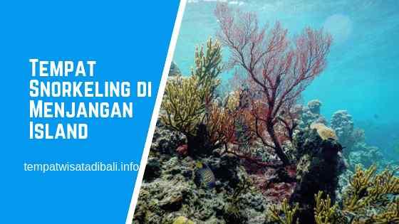 Tempat Snorkeling di Pulau Menjangan Bali