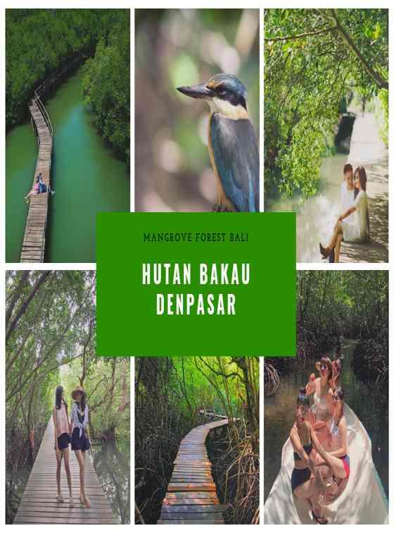 Gambar Foto Hutan Bakau Denpasar Bali