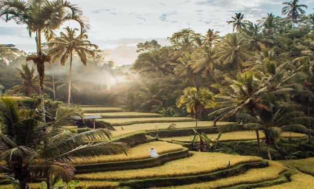 Tegalalang Rice Terraces Ubud Bali Indonesia Image Foto